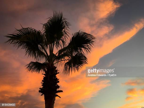 Low Angle View Of Silhouette Tree Against Dramatic Sky
