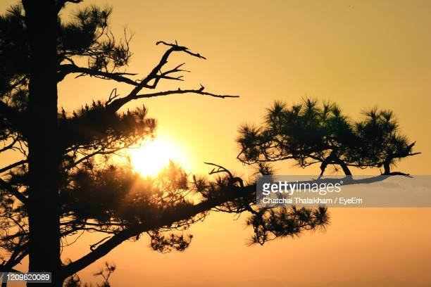 low angle view of silhouette tree against romantic sky - chatchai thalaikham stock pictures, royalty-free photos & images