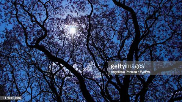 low angle view of silhouette tree against sky at night - prinsloo photos et images de collection