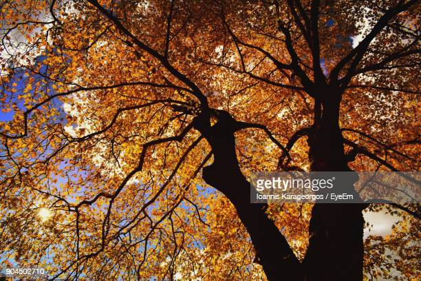 Low Angle View Of Silhouette Tree Against Sky During Autumn
