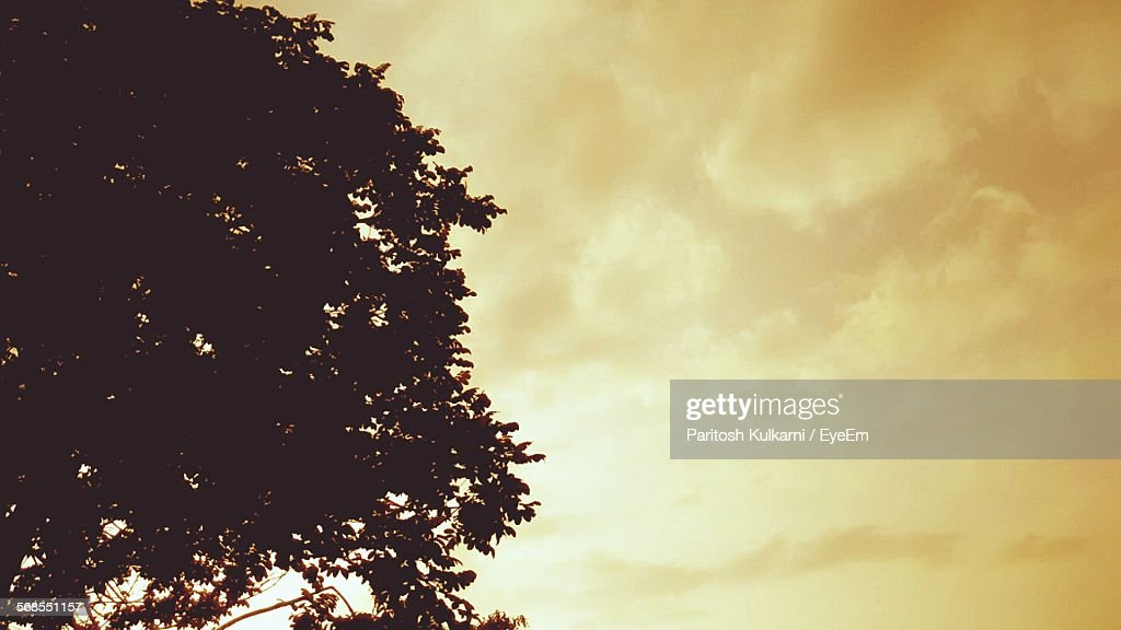 Low Angle View Of Silhouette Tree Against Sky During Sunrise : Stock Photo