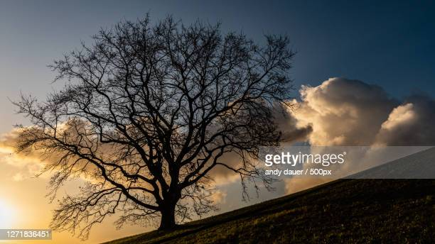 low angle view of silhouette tree against sky during sunset, munich, germany - andy dauer stock pictures, royalty-free photos & images