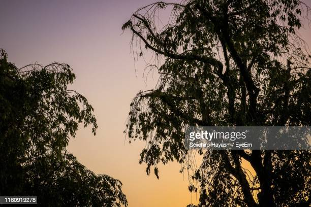 low angle view of silhouette tree against sky during sunset - seiichiro hayashi ストックフォトと画像