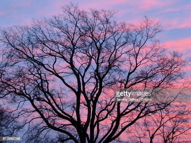 low angle view of silhouette tree against sky during sunset - tulsa stock pictures, royalty-free photos & images