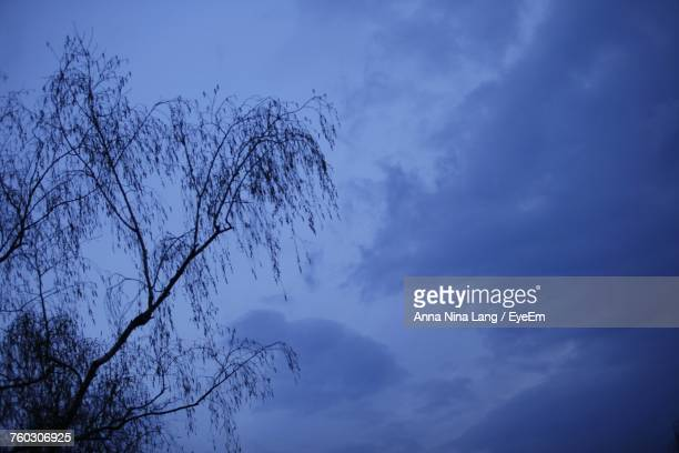 low angle view of silhouette tree against sky - {{relatedsearchurl('london eye')}} stock photos and pictures