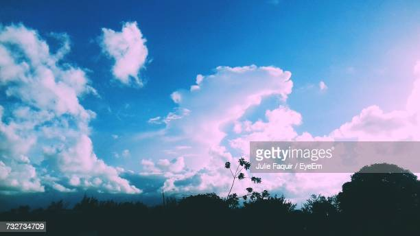low angle view of silhouette trees against blue sky - faquir stock photos and pictures