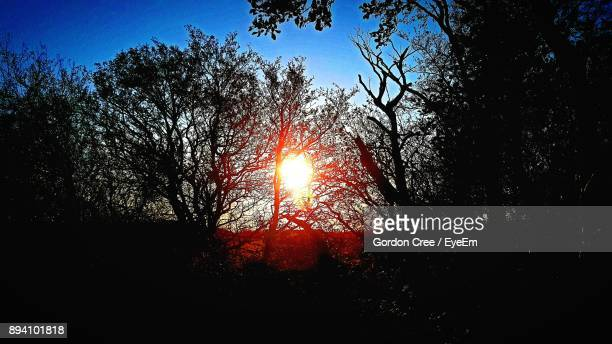 Low Angle View Of Silhouette Trees Against Bright Sun