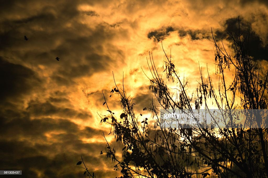 Low Angle View Of Silhouette Trees Against Cloudy Sky During Sunset : Stock-Foto