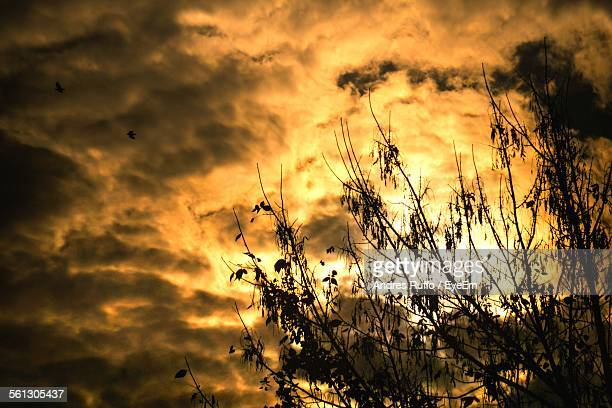 low angle view of silhouette trees against cloudy sky during sunset - andres ruffo stock-fotos und bilder