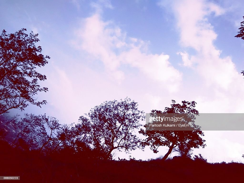 Low Angle View Of Silhouette Trees Against Cloudy Sky : Stock Photo