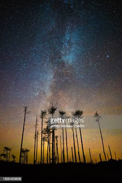 low angle view of silhouette trees against milky way sky at night - llanelli stock pictures, royalty-free photos & images