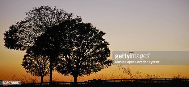 low angle view of silhouette trees against orange sky during sunset - lopez stock pictures, royalty-free photos & images