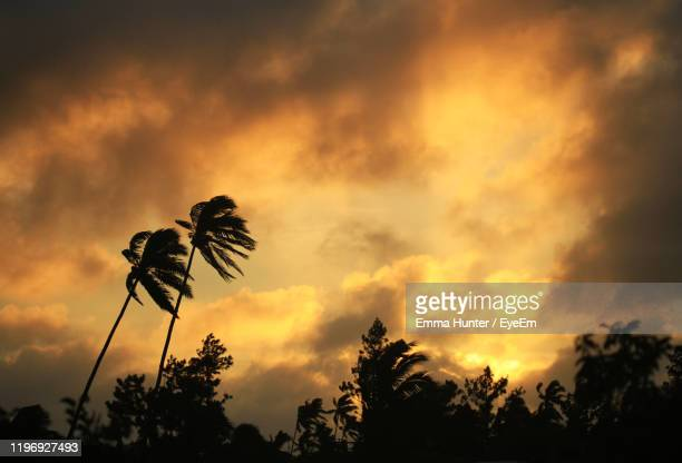 low angle view of silhouette trees against orange sky - emma hunter eye em stock photos and pictures
