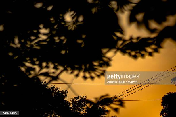 low angle view of silhouette trees against orange sky - andres ruffo stock-fotos und bilder