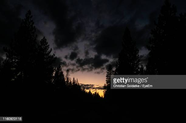 low angle view of silhouette trees against sky at sunset - christian soldatke stock pictures, royalty-free photos & images