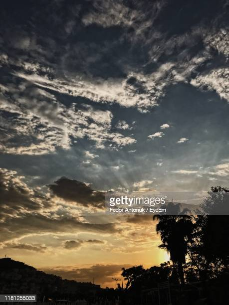 low angle view of silhouette trees against sky at sunset - fedor stock pictures, royalty-free photos & images