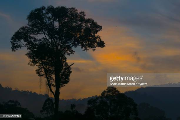 low angle view of silhouette trees against sky at sunset - shaifulzamri stock pictures, royalty-free photos & images