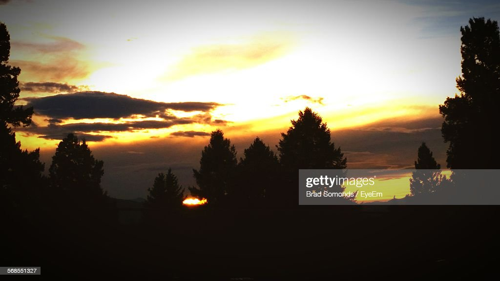 Low Angle View Of Silhouette Trees Against Sky During Sunset : Stock Photo