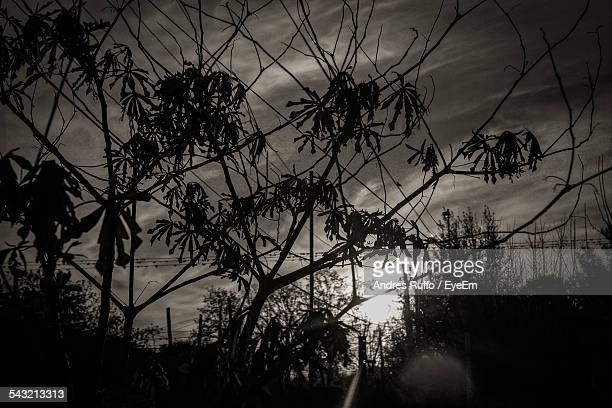 low angle view of silhouette trees against sky - andres ruffo stock pictures, royalty-free photos & images