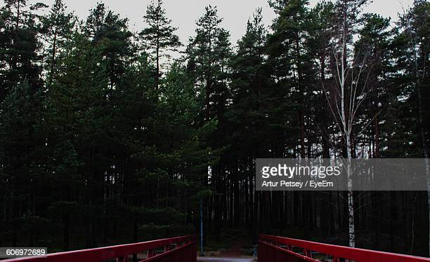 low angle view of silhouette trees against sky - artur petsey foto e immagini stock