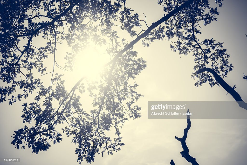 Low Angle View Of Silhouette Trees Against Sky : Stock-Foto