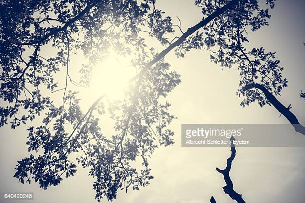 low angle view of silhouette trees against sky - albrecht schlotter stock-fotos und bilder