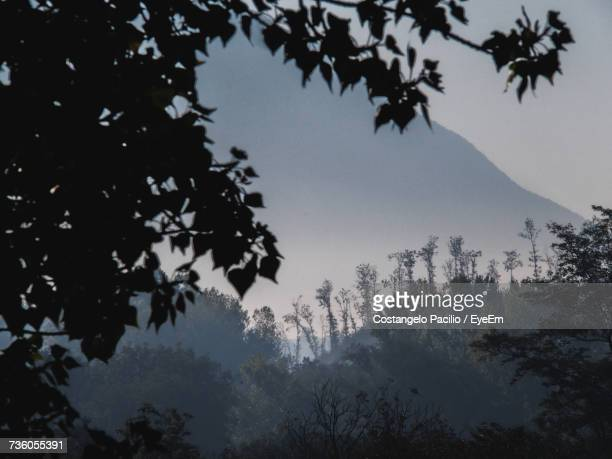 low angle view of silhouette trees against sky - costangelo pacilio foto e immagini stock