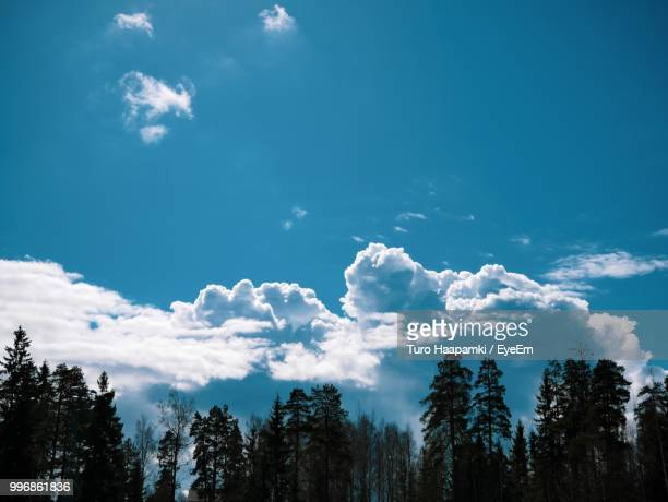 low angle view of silhouette trees against sky - ラッペーンランタ ストックフォトと画像