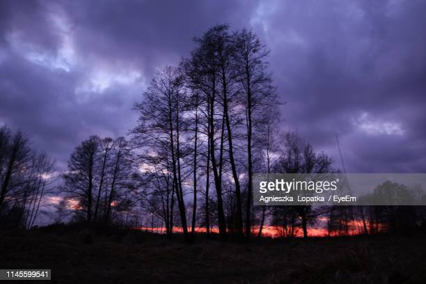 Low Angle View Of Silhouette Trees Against Stormy Clouds At Dusk