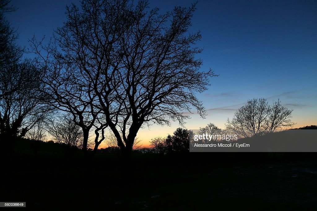 Low Angle View Of Silhouette Trees Against Sunset Sky : Stock Photo
