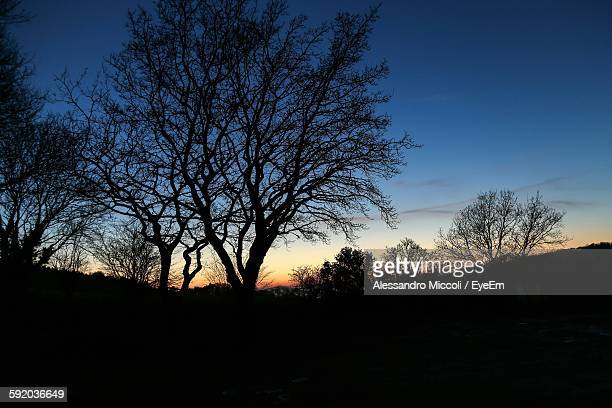 low angle view of silhouette trees against sunset sky - alessandro miccoli stockfoto's en -beelden