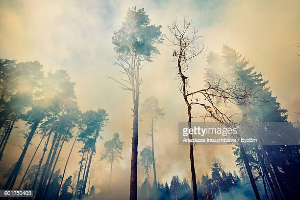 Low Angle View Of Smoke Amidst Trees At Forest