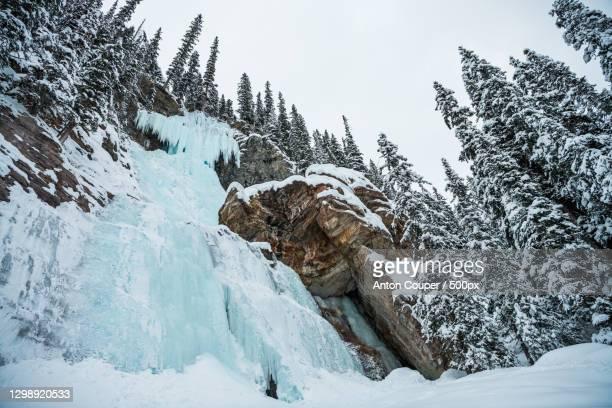 low angle view of snow covered trees against sky - wasser imagens e fotografias de stock
