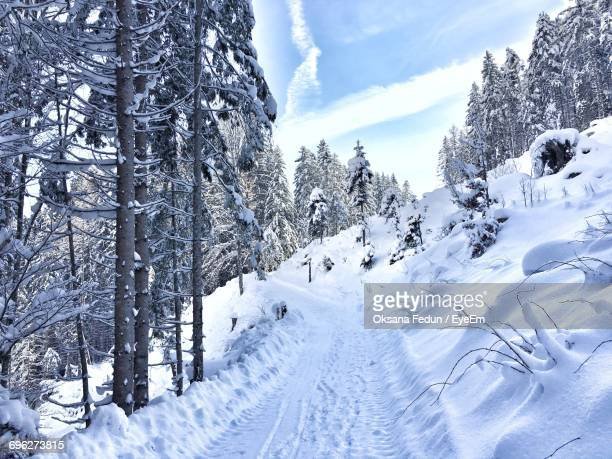 low angle view of snow covered trees against sky - leogang stock pictures, royalty-free photos & images