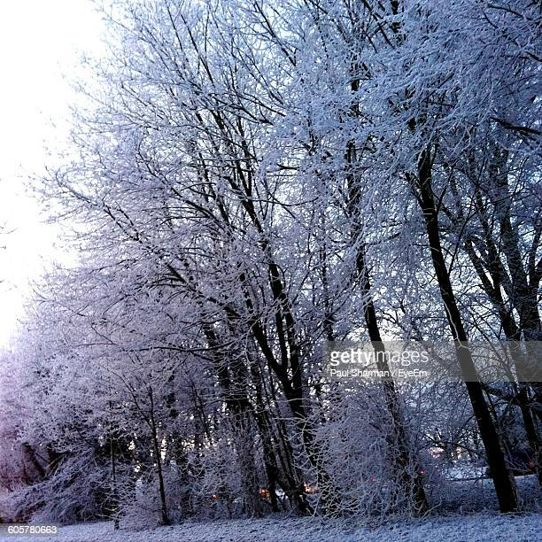 low angle view of snow covered trees - letchworth garden city stock photos and pictures