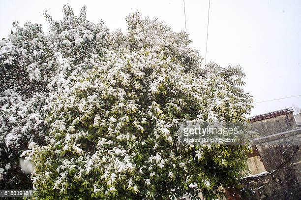 low angle view of snowed tree against the sky - andres ruffo bildbanksfoton och bilder