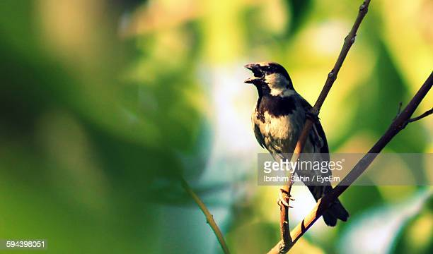 Low Angle View Of Sparrow Perching On Plant