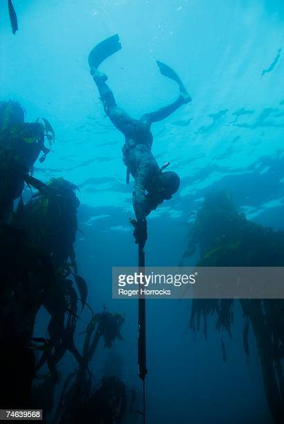 Low Angle View of Spear Fisherman Descending Through Kelp Forests