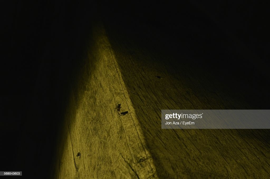 Low Angle View Of Spider On Retaining Wall : Stock Photo
