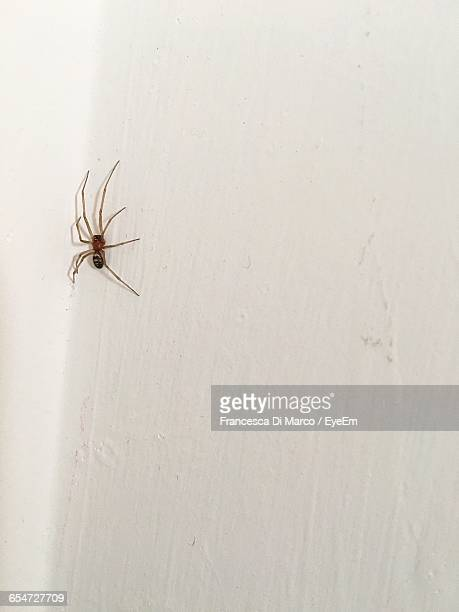 low angle view of spider on white wall at home - spider stock pictures, royalty-free photos & images