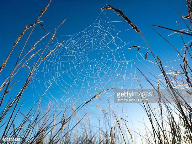 Low Angle View Of Spider Web On Plants Against Clear Blue Sky
