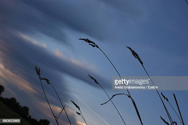 Low Angle View Of Stalks Against The Sky
