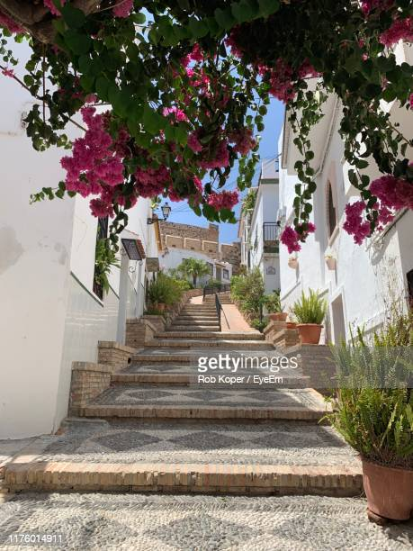 low angle view of steps amidst trees and building - koper stock photos and pictures
