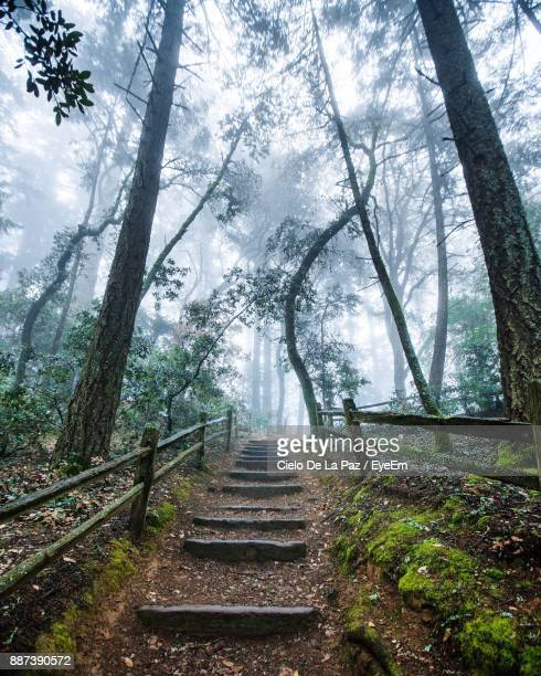 Low Angle View Of Steps Amidst Trees In Forest During Foggy Weather