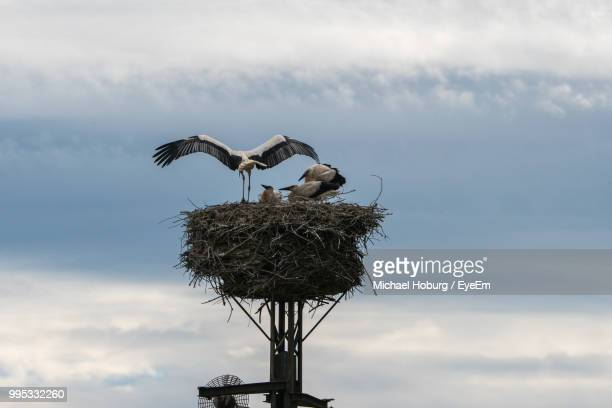 low angle view of storks in nest against sky - quattro animali foto e immagini stock
