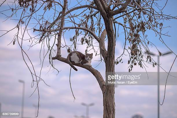 Low Angle View Of Stray Cat Resting On Tree Branch