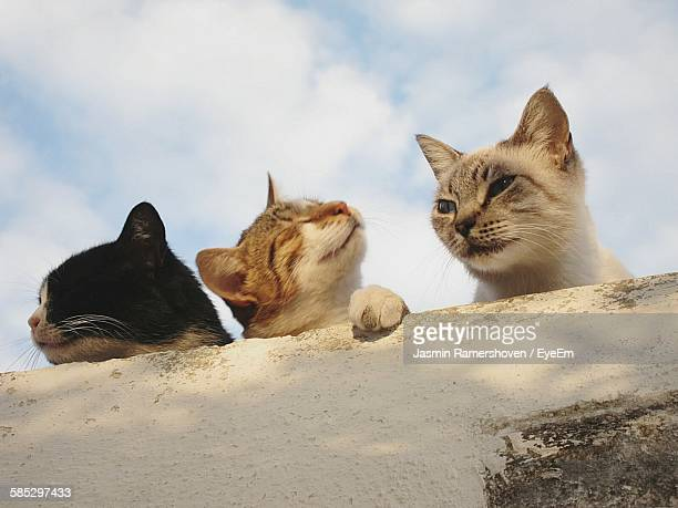 Low Angle View Of Stray Cats On Retaining Wall Against Sky