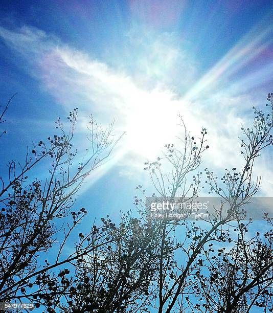 Low Angle View Of Sun Shining In Sky