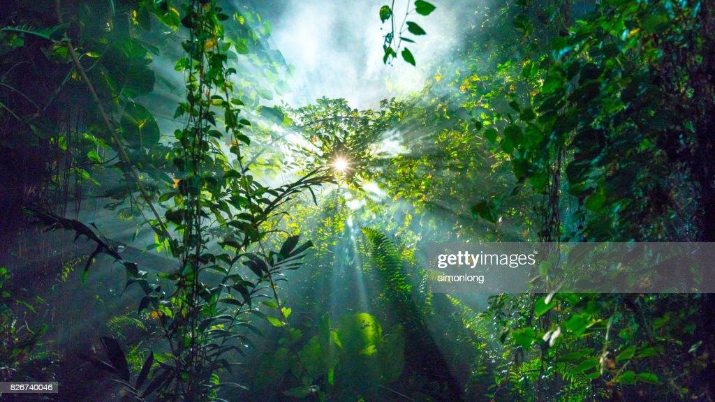 Low Angle View Of Sun Shining Through Tree Kuala Lumpur, Malaysia : Stock-Foto