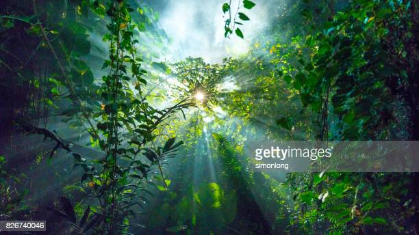 low angle view of sun shining through tree kuala lumpur, malaysia - belleza de la naturaleza fotografías e imágenes de stock